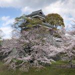 未申櫓の桜