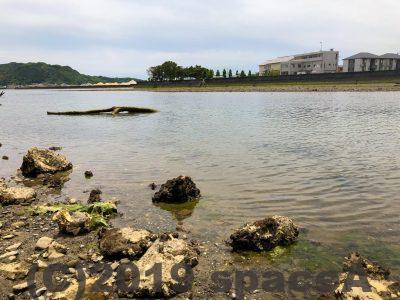 本渡港大矢崎緑地公園の海で魚の跳ねる音がする