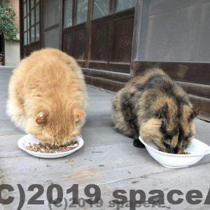餌を食べる猫ちゃん