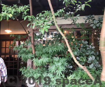 創作料理 更紗(さらさ) 東バイパス店の外観