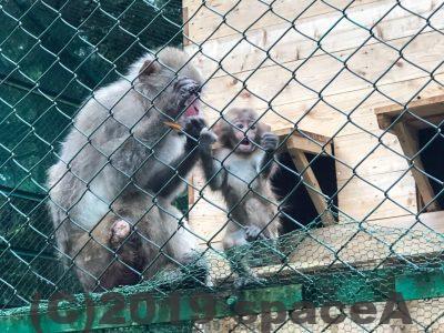 阿蘇猿まわし劇場にいる猿の親子