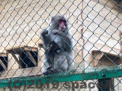 阿蘇猿まわし劇場にいる猿の親子たち